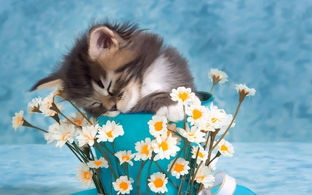 Kittens, cups, flowers, cute pictures, wallpaper