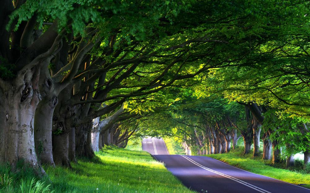 Alley, nature, road, path, trees, road, spring, travel, summer, alley, travel, tree, forest