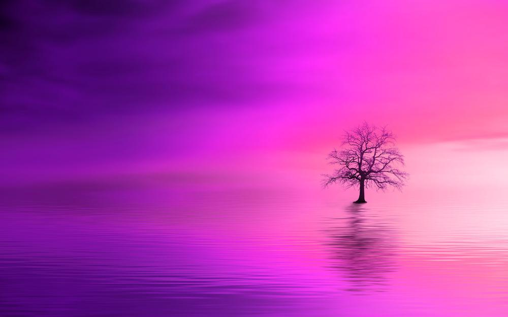 Horizon, pink, tree