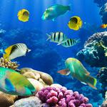 Ocean, underwater, fish, coral, reefs, underwater world, desktop wallpaper