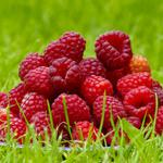 Raspberries, summer