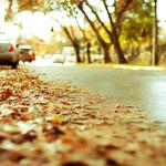 Leaves on city streets hd wallpaper