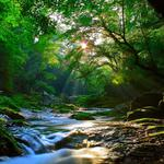 Beautiful sunlight in the forest, streams, scenic wallpaper