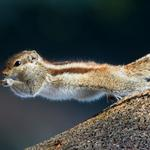 Natural forests, trees, squirrels jumping wallpaper