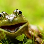 Naturally, frogs computer wallpaper