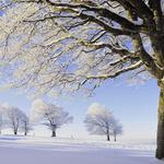 Trees, branches, number, snow, hoarfrost