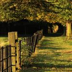 Fences, trees, benches summer wallpaper