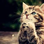 Prayer kitten desktop wallpaper