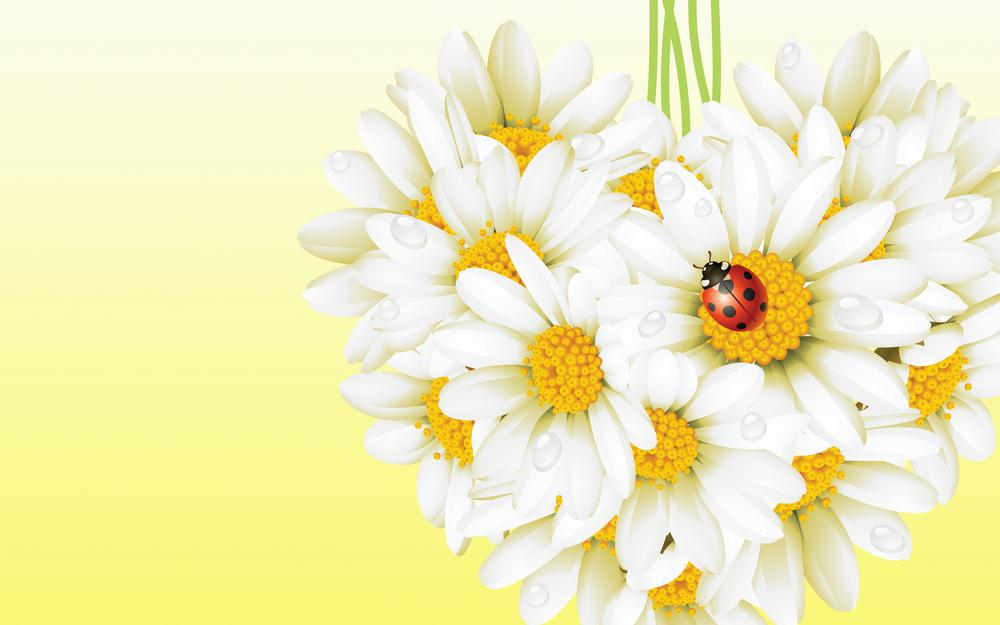 Nature flowers white insect wallpaper