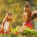 Forest, two, squirrels, berries, mushrooms, cute squirrel wallpaper