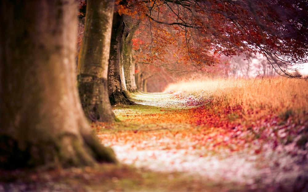 Beech tree and autumn leaves wallpaper