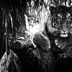 Black and white background, predator, dark background, mustache