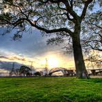 Landscapes, grass, trees, city