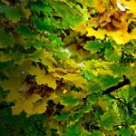 Leaves, branches, autumn, nature wallpaper