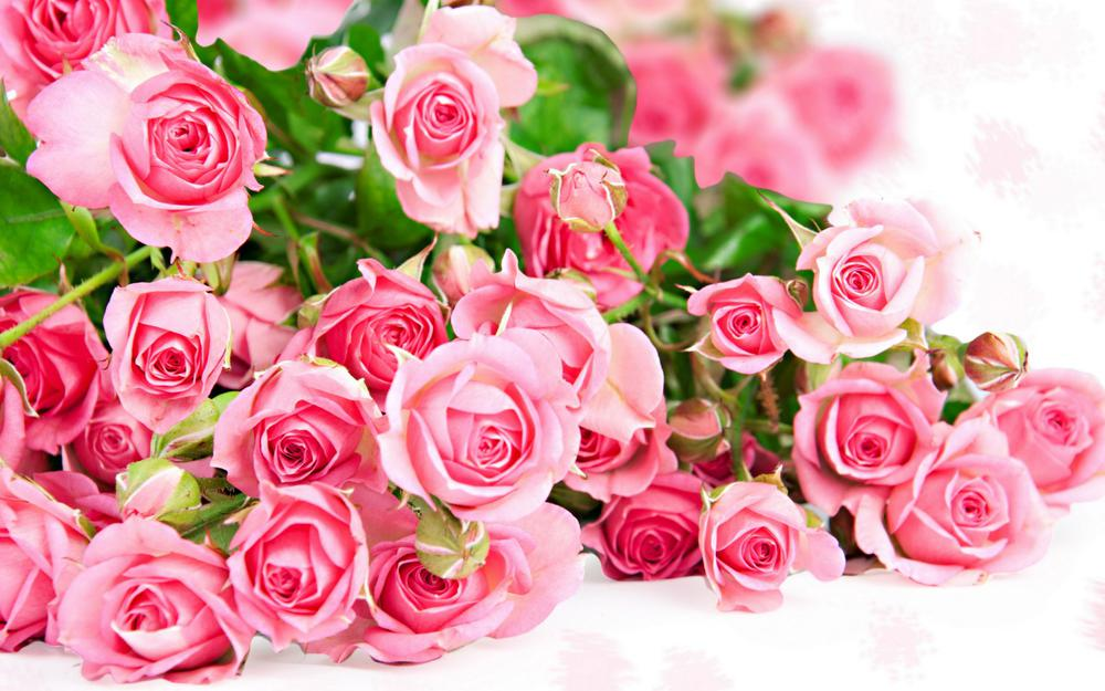 Pink, flowers, roses, wallpaper
