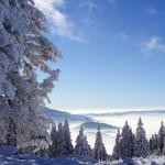 Nature, mountains, forests, snow, winter wallpaper