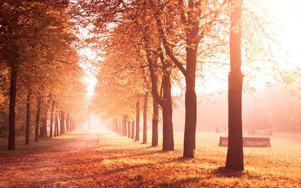 Autumn leaves beautiful scenery wallpaper