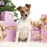 New year, boxes, gifts, jack russell terrier, dog