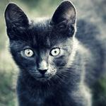 Eyes, kitten, gray, hair, eyes, animal, cat