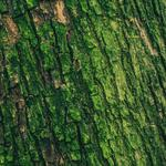 Tree, relief, surface, bark, moss