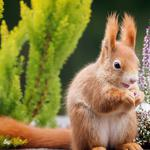 Forest cute little squirrel wallpaper