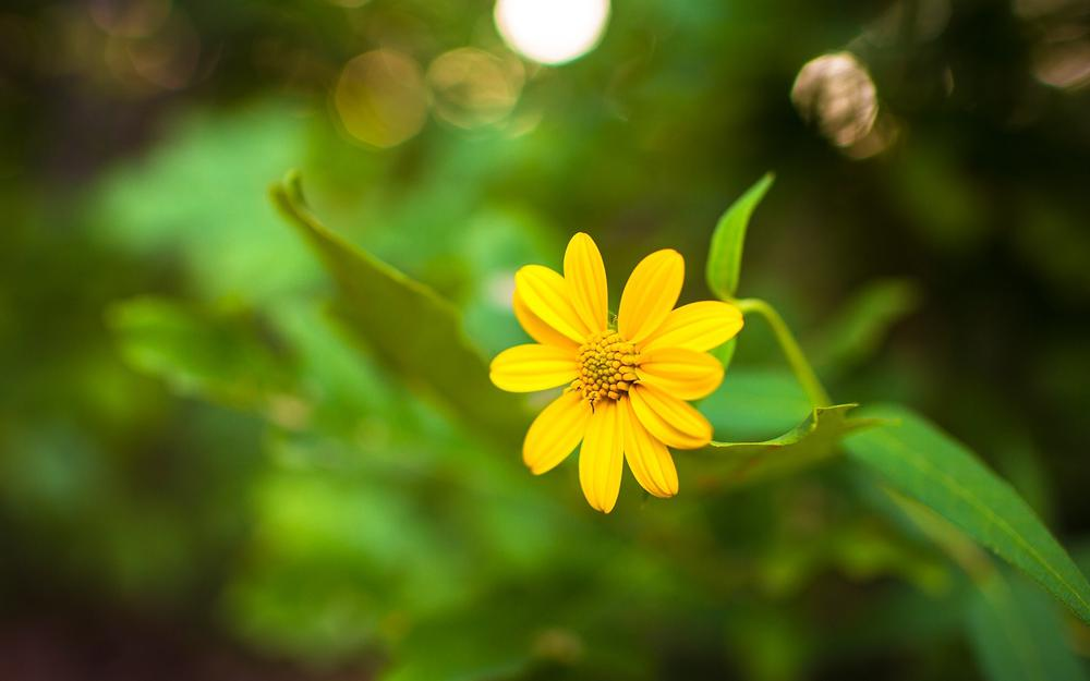 Forest photography, yellow flowers, green plants background images, computer wallpaper