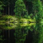 Forest, woods, lake, reflections, natural, beautiful, green scenery wallpaper