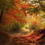 Autumn, woods, roads, fallen leaves, horse, up the goods, wallpapers