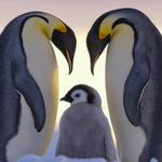 Three penguins like family wallpaper