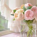 Pink roses, bouquets, vases, computer wallpaper warm