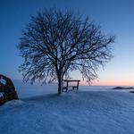 Tree snow winter bench