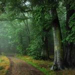 Odenwald, road, germany, rain, fog, summer, forest