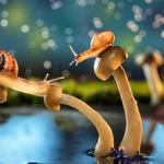 Snails mushrooms nature rain water
