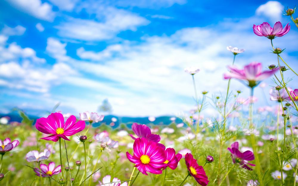 Flowers on the lawn wallpaper