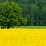 Nature trees field in spring