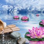 Lotus, rock, water, bamboo, sky, clouds, wallpaper