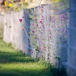 Fence, afternoon sun, road of memories, flowers, fresh, beautiful, grass, wallpaper