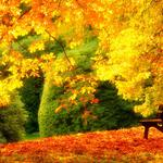 Foliage, forest, trees, chairs, park, grass, autumn colors, walking, scenic wallpaper