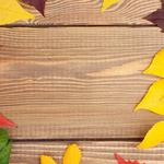 Texture nature leaves fall texture nature leaves autumn wallpaper