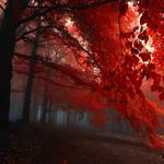 Forest, trees, autumn, leaves, red leaves, pictures, natural, scenic wallpaper