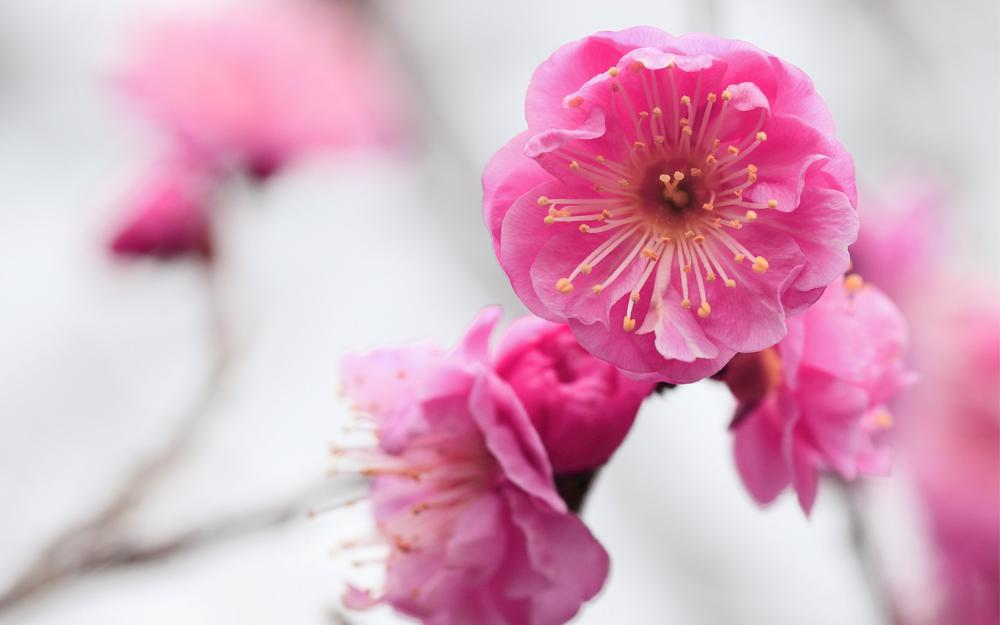 Pink delicate flower