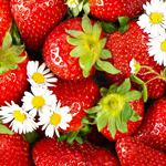Strawberries, berries, flowers