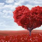 Valentine tree, red giving tree, landscape wallpaper