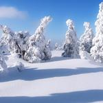 Snow-covered wallpaper