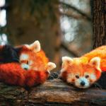 Forest, branches, two red panda, desktop wallpaper