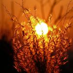 Nature sunset bush