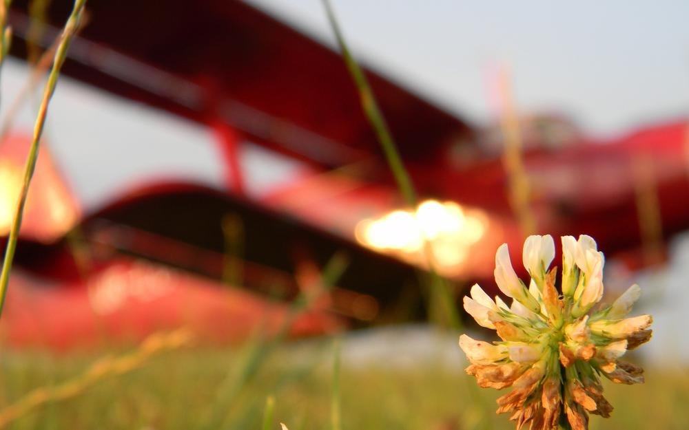 Lonely flower at sunset