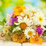 Bouquet of wild flowers hd wallpaper