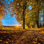 Autumn road trees sunset wallpaper