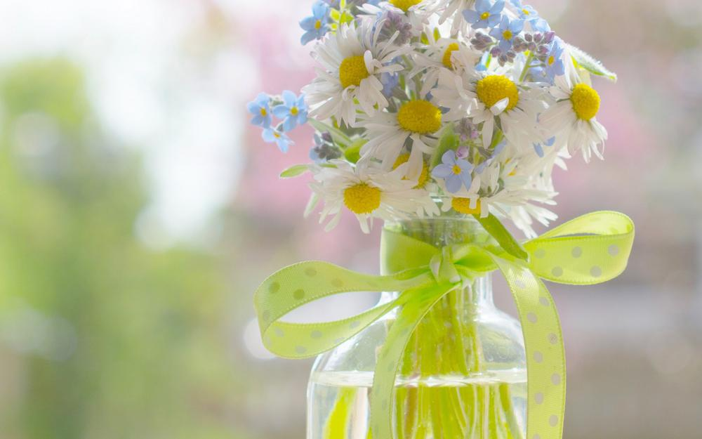 Daisies, forget-me, bouquet, ribbon, daisy computer wallpaper